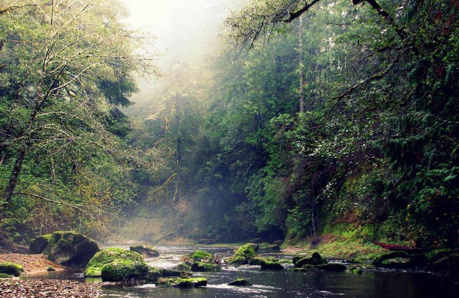 Elliot forest