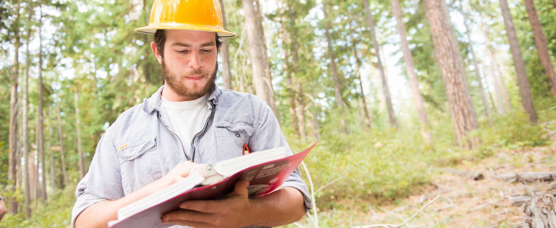 forest engineering student