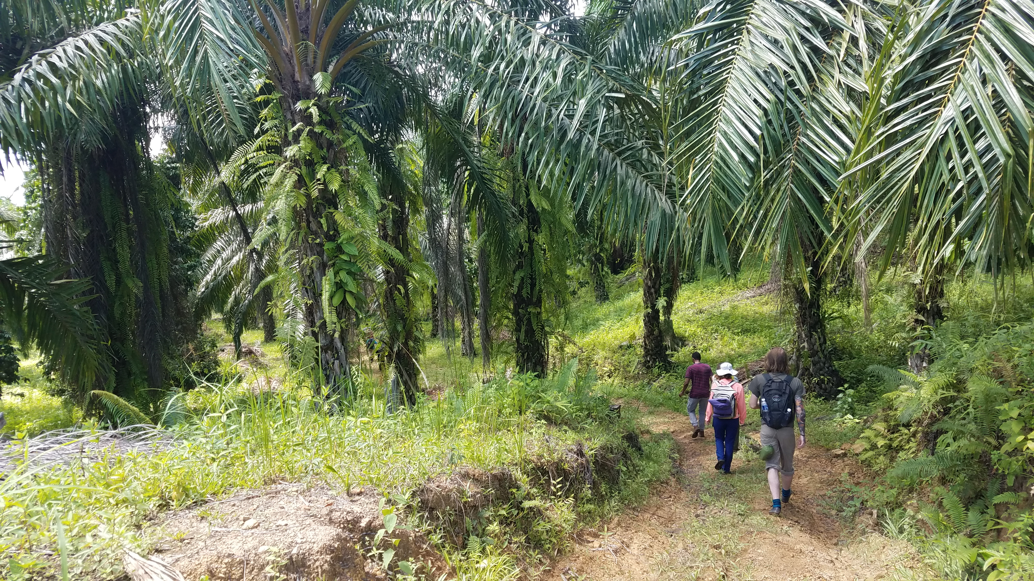 students hiking in tropical forest