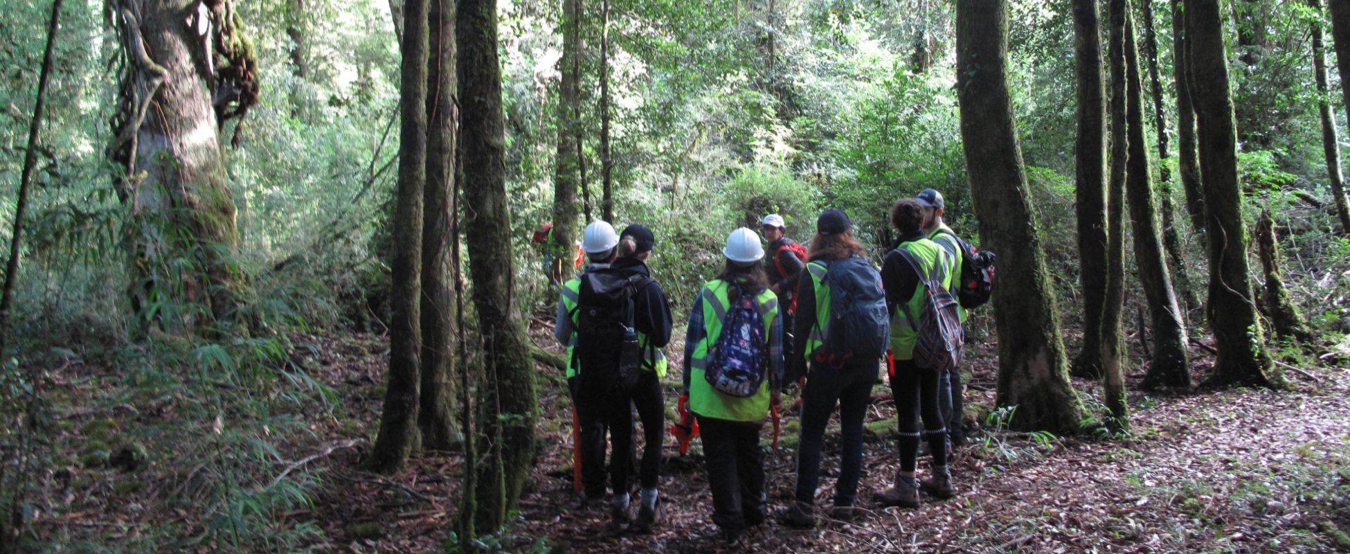 Forestry students standing in a forest