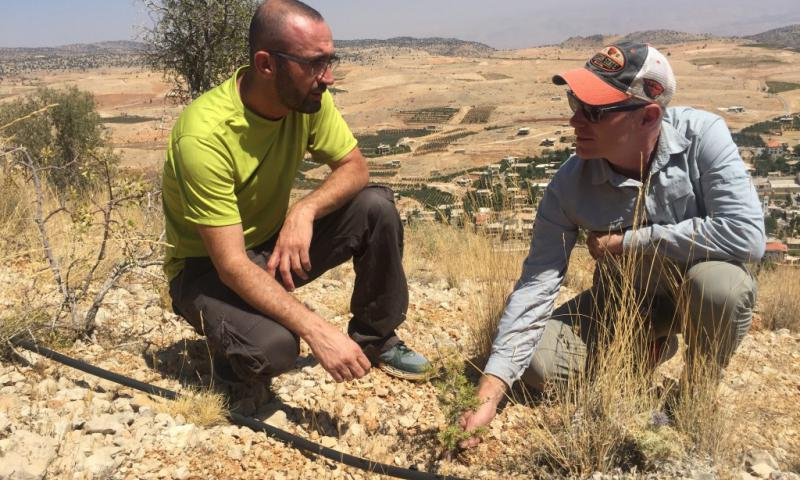 Lebanon Reforestation Initiative